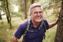 Middle aged Caucasian man taking a break during a hike, leaning on a tree in a forest, waist up, close up stock photo