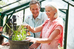 Middle Aged Couple Working Together In Greenhouse. Happy Middle Aged Couple Working Together In Greenhouse Smiling Stock Photo