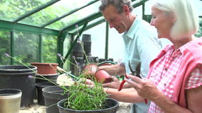 Middle Aged Couple Working Together In Greenhouse stock video footage