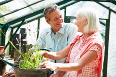 Middle Aged Couple Working Together In Greenhouse. Smiling At Each Other Royalty Free Stock Photo