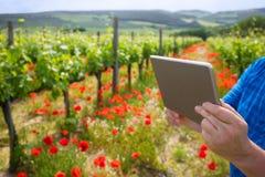 Farmer using tablet computer in vineyard Stock Photo