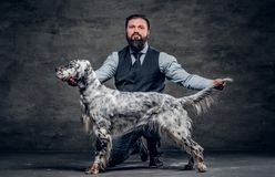 Middle-aged hunter dressed in elegant clothes sits on his knee and shows the full length of his purebred English Setter. Studio photo against a dark textured royalty free stock images
