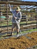 Middle-aged Labourer Raking Dried Sultanas. Royalty Free Stock Images