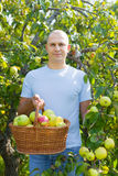 Middle-aged man with apple harvest Royalty Free Stock Image