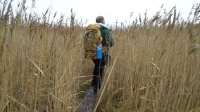A middle-aged man with a backpack goes through the reeds stock footage