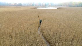 A middle-aged man with a backpack goes through the reeds stock video footage