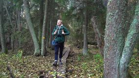 Middle aged man on an ecological nature trail through an autumn forest in a natural park. A middle-aged man with a backpack walking along an ecological natural stock video footage