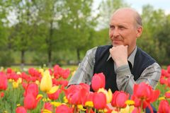Middle-aged  man among blossoming tulips Royalty Free Stock Image