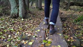 Middle aged man on an ecological nature trail through an autumn forest in a natural park. A middle-aged man with a backpack walking along an ecological natural stock video