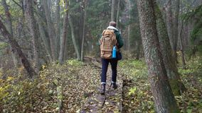 Middle aged man on an ecological nature trail through an autumn forest in a natural park. A middle-aged man with a backpack walks along an ecological natural stock footage