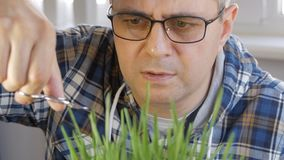 A middle-aged man, with glasses on his eyes, mows the lawn with manicure scissors. A middle-aged man, with glasses on his eyes, carefully mows the lawn with stock video footage