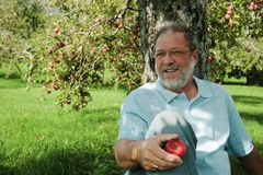Middle aged man in orchard. A view of a middle aged man with a beard sitting on the ground under an apple tree in an apple orchard, holding a ripe red apple and stock image