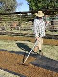 Middle-aged Man Raking Dried Sultanas. Stock Photo