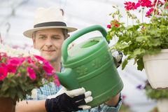 Middle-aged man watering flower plants in greenhouse stock photography