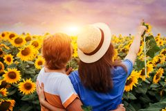 Middle-aged mother and her daughter walking in sunflower field Stock Photos