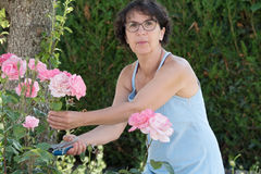 Middle-aged woman cutting a rose Royalty Free Stock Image