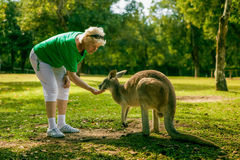 Middle aged woman feeding a kangaroo at the zoo Royalty Free Stock Photos