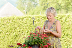 Middle-aged woman with a flowering plant in the garden royalty free stock photography
