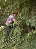 Middle-aged Woman Gathering Plant Cuttings. Stock Photo