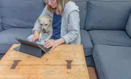A middle aged woman at home using her laptop computer with her pet dog also looking at the screen. A typical modern day scene of a middle aged woman at home stock photo