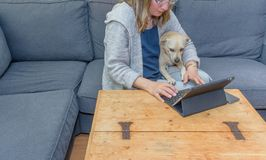 A middle aged woman at home using her laptop computer with her pet dog also looking at the screen. A typical modern day scene of a middle aged woman at home stock photography