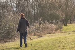 Middle-aged woman seen walking in a nature reserve using a walking pole. Middle-aged woman seen walking away from the camera, using a Walking Pole while walking stock photo