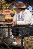A middle-aged woman selling guinea pigs. A middle-aged Andean woman selling guinea pigs at the market, Ecuador Royalty Free Stock Images