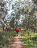 Middle-aged Woman Walking Along Bush Track. Stock Photography