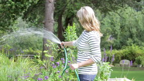 Middle Aged Woman Watering Garden With Hosepipe