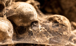 Middle ages skulls Royalty Free Stock Images