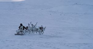 In the middle of Arctic snow man wearing a fur and have a ride with reindeers on a sleigh. slow motions stock footage