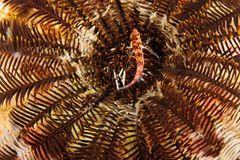 In the middle of a crinoid - Andaman Sea Royalty Free Stock Images