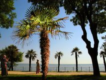 Middle east. Istanbul quay, palms and street scene Stock Photography