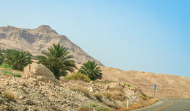Middle East landscape, palm trees and mountain, Israel Royalty Free Stock Photo