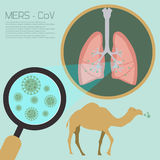 The middle east respiratory syndrome disease transfer vector diagram Royalty Free Stock Photos