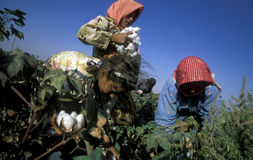MIDDLE EAST SYRIA ALEPPO COTTON PLANTATION. Childern earning cotton on a Cotton Plantation near the city of Aleppo in Syria in the middle east royalty free stock images