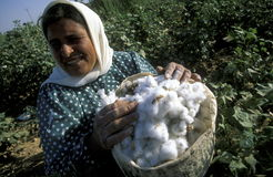 MIDDLE EAST SYRIA ALEPPO COTTON PLANTATION. Women earning cotton on a Cotton Plantation near the city of Aleppo in Syria in the middle east royalty free stock images