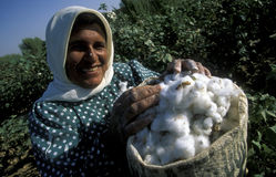 MIDDLE EAST SYRIA ALEPPO COTTON PLANTATION. A women earning cotton on a Cotton Plantation near the city of Aleppo in Syria in the middle east stock image
