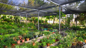 Middle Eastern Greenhouse Stock Photography