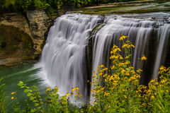 The middle falls in Letchworth State Park. With a foreground of wild brown eye susans Stock Photos