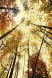 Fall foliage-Fall Creek Falls-looking up from the  Stock Photo