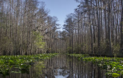 Middle Fork Suwannee River red trail, Okefenokee Swamp National Wildlife Refuge. Cypress trees and Spanish Moss, Minnies Lake, Okefenokee canoe kayak trail, red Stock Photos