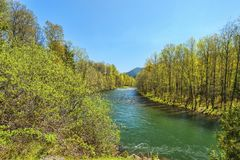 Middle Fork of the Willamette River. Known for it`s green waters in Oakridge, Oregon Royalty Free Stock Photos