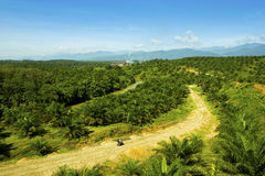 In the middle of the nature a palm oil factory at Sumatra Indonesia Royalty Free Stock Photo