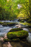 Middle Prong of the Little River, Great Smoky Mountains. Morning light over the Middle Prong of the Little River in the Great Smoky Mountains. Clear water Stock Photo