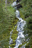 Middle Section of Upper Proxy Falls Central Oregon Royalty Free Stock Images