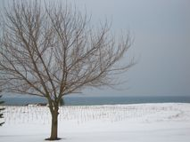 naked tree in the middle of the snow royalty free stock photo