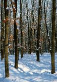 In the middle of the snowy forest. Illustrations,landscapes royalty free stock photo