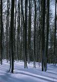 In the middle of the snowy trees. In wooded landscape Stock Photography