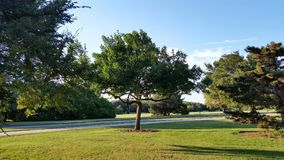 The middle tree of the bunch. Wichita Falls, Texas park with green grass, trees and blue skies stock image